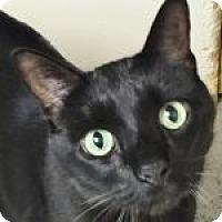 Adopt A Pet :: Binx - Medford, MA