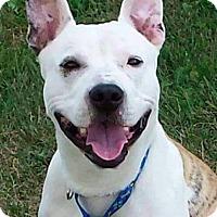 Adopt A Pet :: Dexter - Brunswick, OH