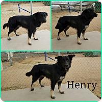 Adopt A Pet :: Henry - California City, CA