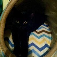 Adopt A Pet :: Peter - Philadelphia, PA