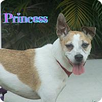 Adopt A Pet :: Princess - Sarasota, FL