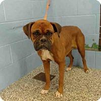 Adopt A Pet :: A499745 - San Bernardino, CA