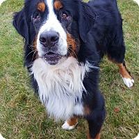 Adopt A Pet :: Murphy - Mount Gilead, OH
