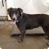 Adopt A Pet :: A655370 - Camarillo, CA