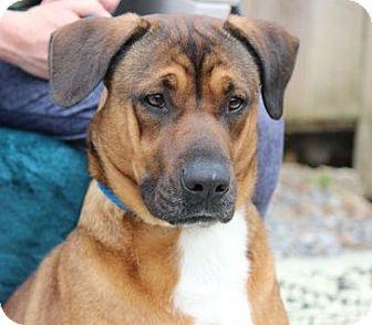 Boxer/Hound (Unknown Type) Mix Dog for adoption in Locust Fork, Alabama - Karmel    Great Girl!!!   Lower Fee!
