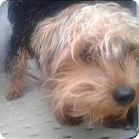 Adopt A Pet :: Stuart - Birmingham, AL
