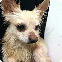 Adopt A Pet :: Emilio! Check back 2/28! - New York, NY