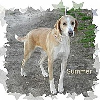 Adopt A Pet :: Summer - Norfolk, VA