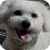 Adopt A Pet :: Sunny - La Costa, CA