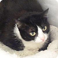 Adopt A Pet :: Sylvia - El Cajon, CA