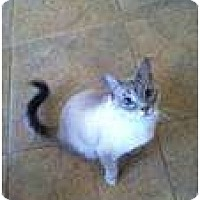 Adopt A Pet :: Sprinkles - Jacksonville, FL