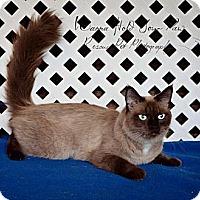 Adopt A Pet :: Chardonnay - East Hanover, NJ