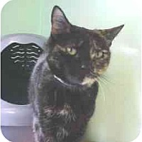 Adopt A Pet :: Cali - Lunenburg, MA