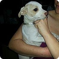 Adopt A Pet :: Spot - South Jersey, NJ