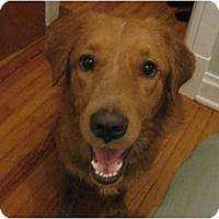 Adopt A Pet :: Summer - Denver, CO