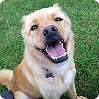 Adopt A Pet :: Kenya - Detroit, MI