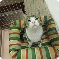 Adopt A Pet :: Fanta - Medina, OH