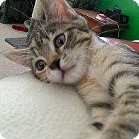 Adopt A Pet :: Sidney - Irvine, CA
