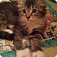 Adopt A Pet :: Jada - Columbus, OH