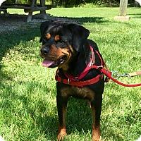 Adopt A Pet :: Raven - Frederick, PA