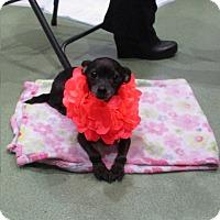 Adopt A Pet :: Sasha - Long Beach, NY