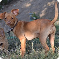 Adopt A Pet :: Riley - Simi Valley, CA