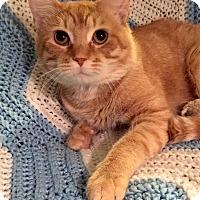 Adopt A Pet :: Wolverine - Addison, IL