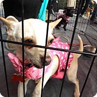 Adopt A Pet :: Peanut (Freckles) - Oakley, CA