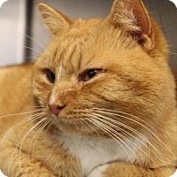 Adopt A Pet :: C-68367 Tony - Westampton, NJ
