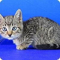 Adopt A Pet :: Dewey - Carencro, LA