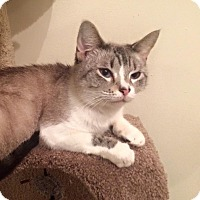 Adopt A Pet :: Aria - Flowery Branch, GA