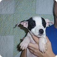 Adopt A Pet :: Kayla - Oviedo, FL