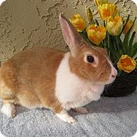 Adopt A Pet :: Tessa - Bonita, CA