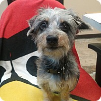Adopt A Pet :: Macy - Oviedo, FL