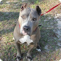 Adopt A Pet :: Gigi - Ft. Myers, FL