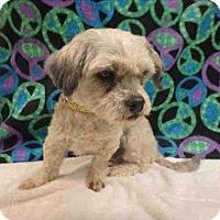 Adopt A Pet :: Ducky - Encino, CA