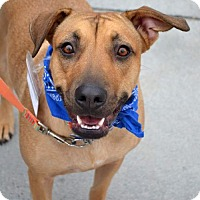Adopt A Pet :: Breeze - Adopted! - San Diego, CA