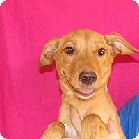 Adopt A Pet :: Loma - Oviedo, FL