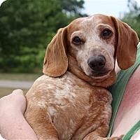 Adopt A Pet :: Duke - Elyria, OH
