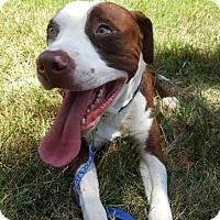 Adopt A Pet :: Jersey - Charlotte, NC