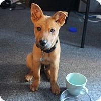 Adopt A Pet :: Todd - Los Angeles, CA