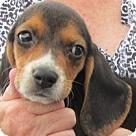 Adopt A Pet :: Grayson