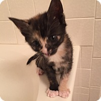 Adopt A Pet :: Joondalup - Colorado Springs, CO