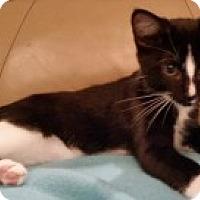 Adopt A Pet :: Zurich - McHenry, IL