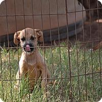 Adopt A Pet :: Rachel - Wilminton, DE