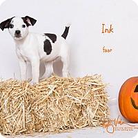 Adopt A Pet :: Ink - Riverside, CA