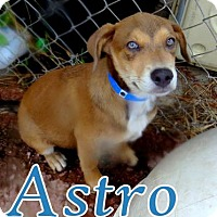 Shepherd (Unknown Type) Mix Puppy for adoption in Georgetown, South Carolina - Astro