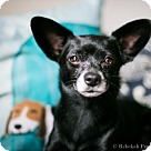 Adopt A Pet :: Tippy (Has Application)