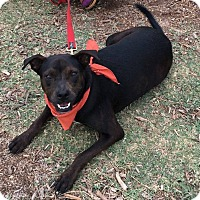 Catahoula Leopard Dog Mix Dog for adoption in Boerne, Texas - Spirit
