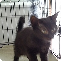 Adopt A Pet :: Maui - Port Clinton, OH